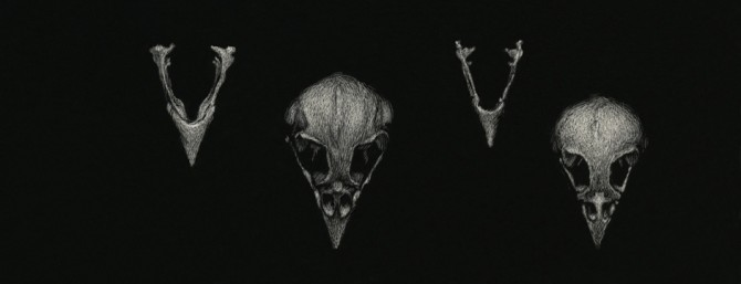 SparrowSkulls_01
